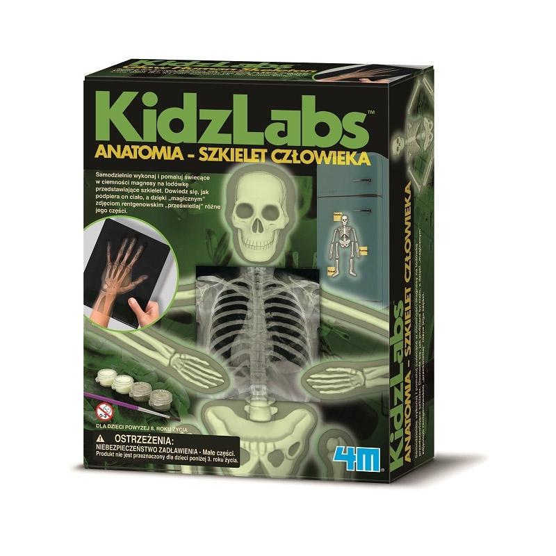 Anatomia - Szkielet człowieka